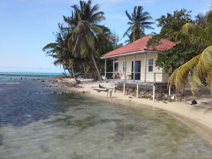 A cabana with palm trees on the the shores of Tobacco Caye, Belize
