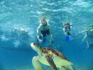 Underwater photo of divers swimming with a Sea Turtle at Hol Chan, Belize