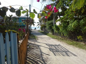 A white sandy street, leading to the water front of Caye Caulker, Belize. Flowers spill over the fences that encircle private island homes.