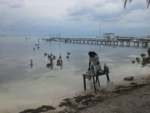 A man cleans fish on the shore of Caye Caulker Belize while pelicans in the water wait for scraps
